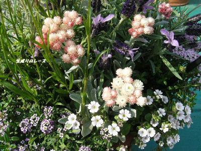P1140763花たち
