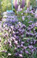 P1140770花たち