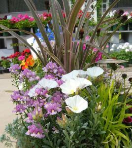 P1140755花たち