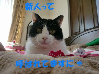 コピー ~ CIMG0149