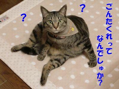 コピー (2) ~ CIMG0062