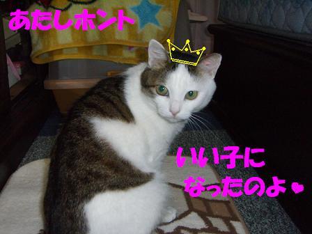 CIMG0462.jpg