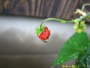 IMG_2651s2006.5.8.jpg