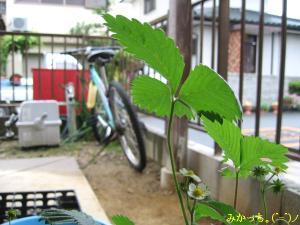 IMG_2796s2006.5.19.jpg