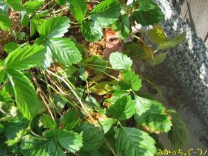 IMG_4209s2006.10.13.jpg