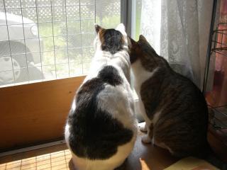 外を見るにゃんこ。-1