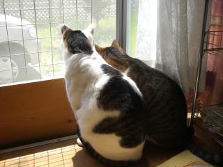 外を見るにゃんこ。-2