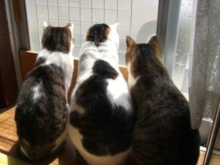 外を見るにゃんこ。-4
