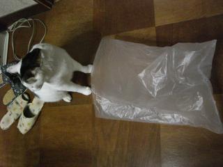 にゃんこ、袋詰め。-1