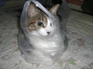 にゃんこ、袋詰め。-5