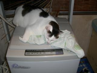 しんちゃんと洗濯機。-1