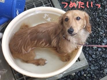 ぷりん風呂1