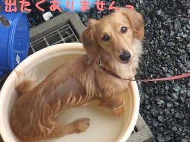 ぷりん風呂3