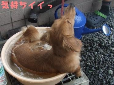 ぷりん風呂2