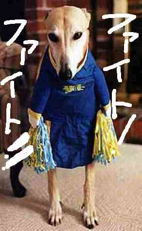 dog_cheerleader2.jpg