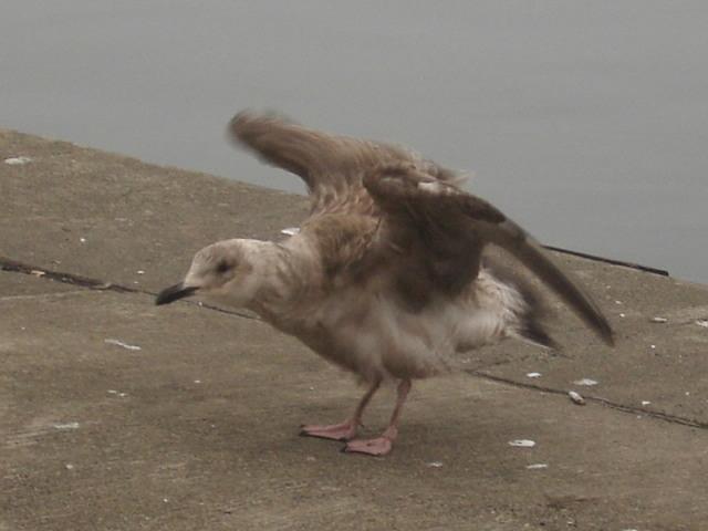 雄武の鳥さん