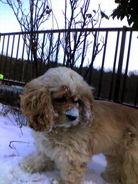 昨日は凄い吹雪でした~!!!リリ~ちゃん!お鼻!