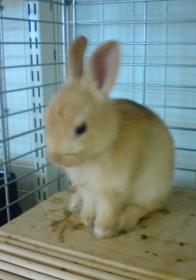 そのウサギは、手乗りサイズですか!?