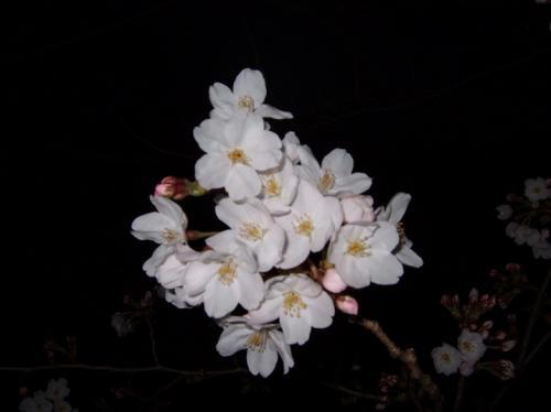 2009年3月28日 160