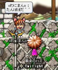 Maple0245.jpg