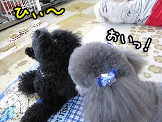 20080812-129.jpg