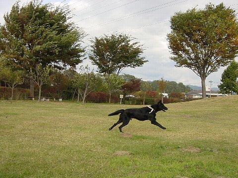 2005 10 31 Pouの走り