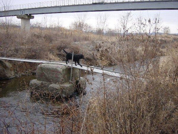 ○2006 01 21 一本橋.JPG