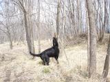 2007 03 04 樹上のダミー発見
