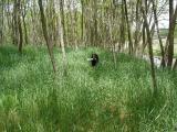 林の中レトリーブ.JPG