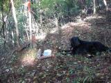 2007 10 28 林の中木漏れ日を浴びて.JPG