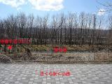 さくら咲く小路からのコピー.jpg