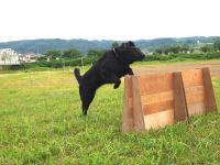 2008 06 21 P Jump-0.JPG