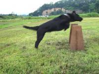 2008 06 21 P Jump-2.JPG