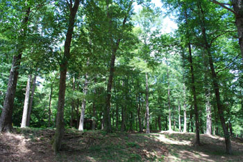 貸切の森の中