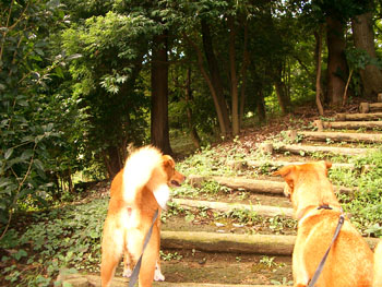森の公園 1