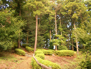 森の公園 2