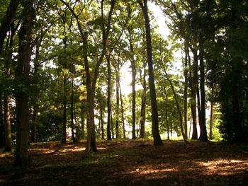 森の公園 3