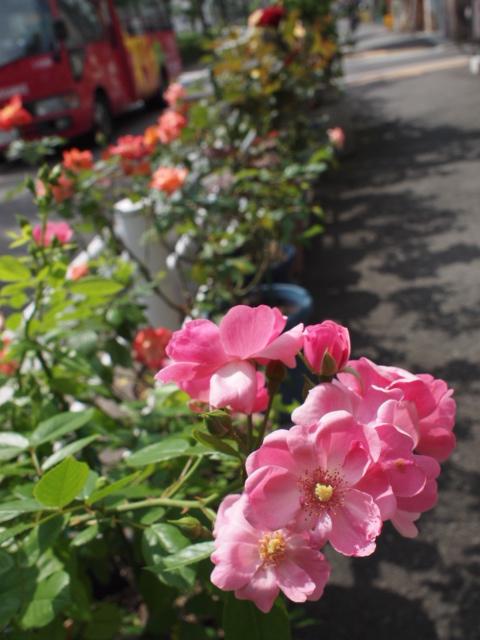 お花を楽しむ人や