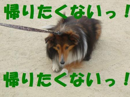 a21_20090421170954.jpg