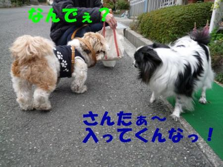 b3_20090329000112.jpg