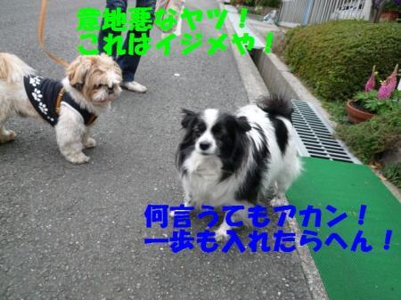 b6_20090329000113.jpg