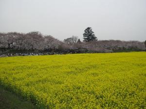 0404~05お花見 007