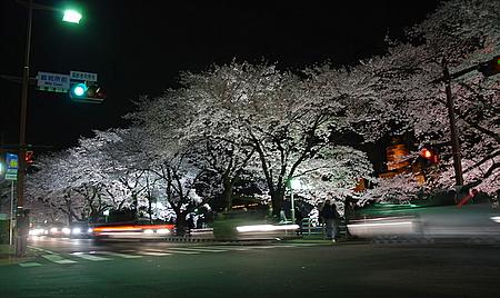 yozakura_1.jpg