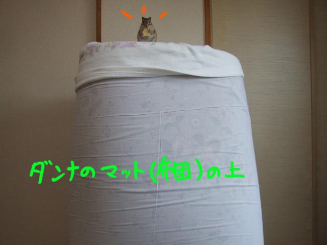 DSCF090520c5088.jpg
