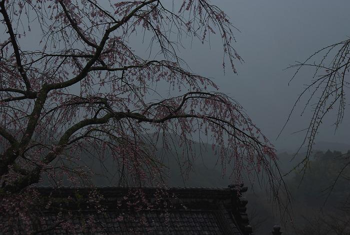 雨の慶寿寺 其の弐