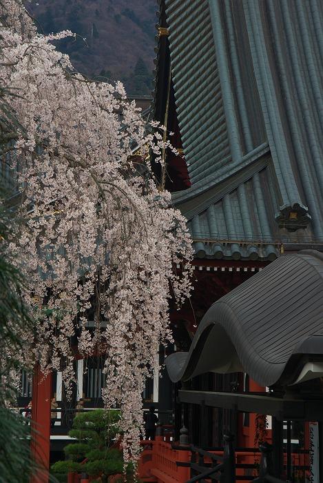 桜 2009 その2