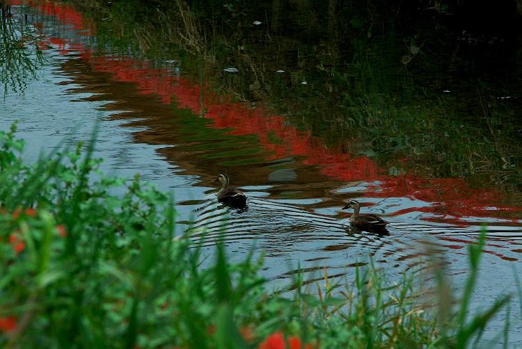 彼岸花が咲く里の川