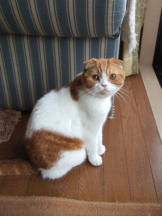 2007_0804okinawa0041.jpg