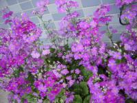 003_convert_20090318191341.jpg