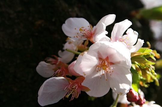 406-f1.jpg